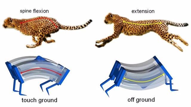Nuevos robots guepardo galopantes se mueven tres veces mas rápido