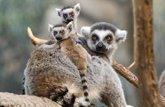 Foto: Animales salvajes a un clic: conoce el reino animal sin salir de casa
