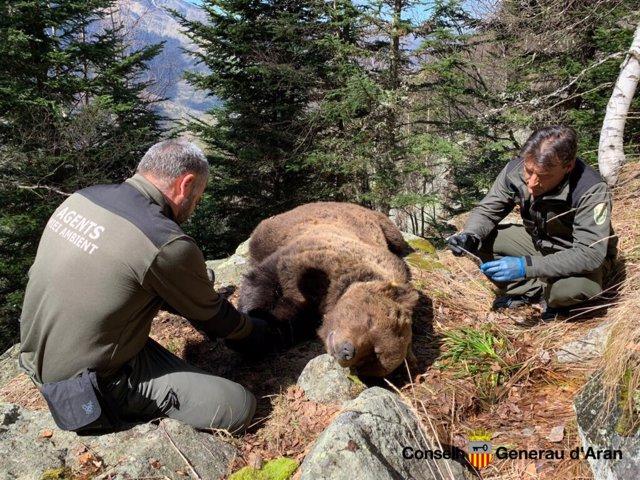 L'ós Cachou al costat de dos agents del Miei Ambient
