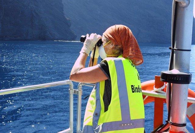 Gobierno de Canarias y Cabildo de Tenerife monitorizan al águila pescadora, espe