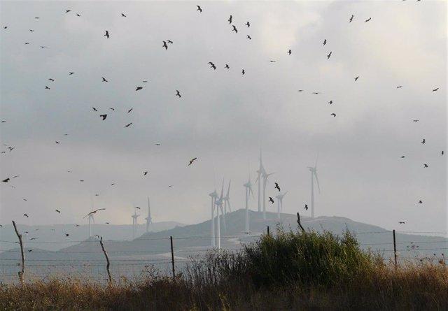 Migración de aves que estudia la Universidad de Málaga para la correcta ubicación de parques eólicos