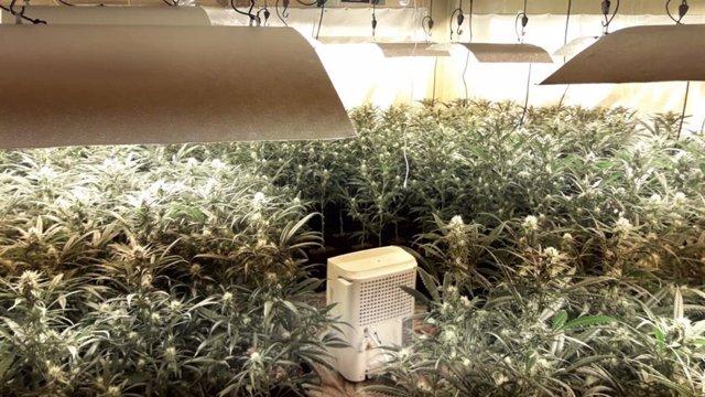 Plantació de marihuana en un pio ocupat a Barcelona