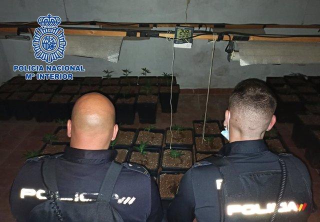Agentes de la Policía Nacional descubren una plantación de marihuana tras un conato de incendio