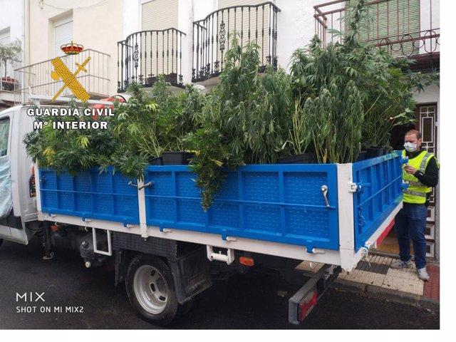 Jaén.- Sucesos.- Tres detenidos en Campillo de Arenas acusados de cultivar marih