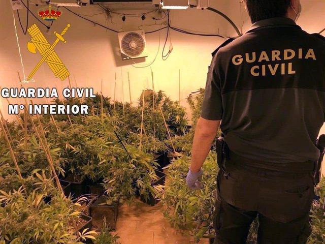 Marihuana intervenida en una casa de Benahadux (Almería)