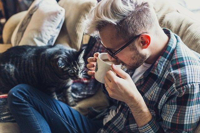 Café, infusión, taza, desayuno, mascota, gato