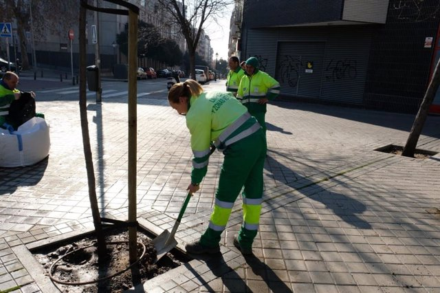 Plantación de árboles en Madrid