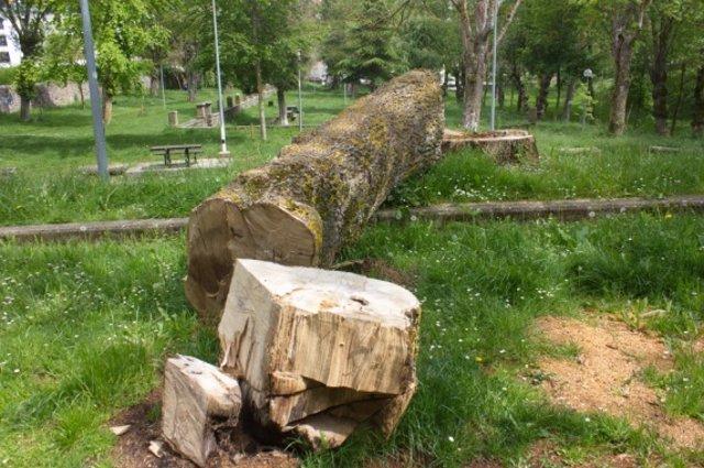 ARCA denuncia la tala de fresnos centenarios en el Parque de las Fuentes
