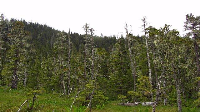 Bosque boreal del Parque Nacional Glacier Bay de Alaska