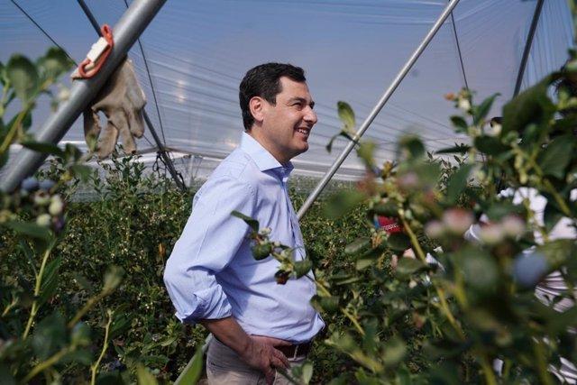 El presidente de la Junta, Juanma Moreno, en una finca de arándanos.