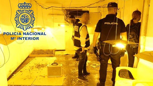 """Nota Prensa:""""La Policía Nacional Desmantela Un Laboratorio Cultivo De Marihuana Y Detiene A Cuatro Personas"""""""