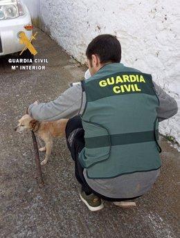 Un agente rescata al perro con el palo en el cuello.