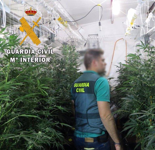 Plantación de marihuana en Albox (Almería)