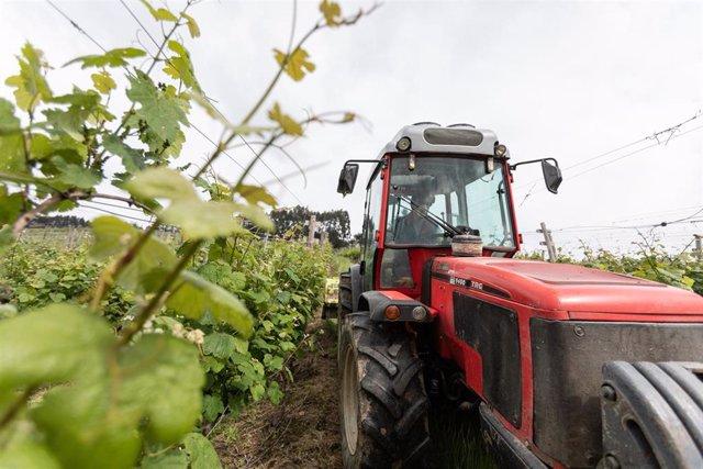 Un trabajador montado en un tractor trabaja en los viñedos de la empresa Txakoli Txabarri denominación de origen 'Vinos de Euskadi'. El sector vitivinícola es uno de los principales motores del turismo y de la riqueza nacional, ya que representa el 1,5% d