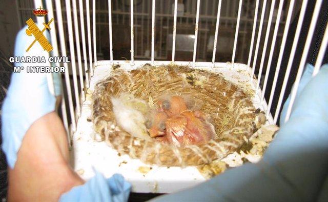 Nido de aves recuperadas