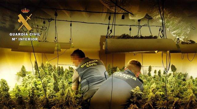 Intervención de la Guardia Civil ante una plantación de marihuana