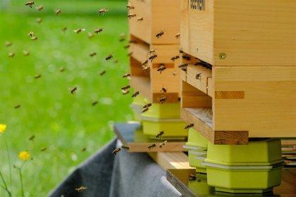 España se une a la red de colmenas inteligentes de T-Systems para monitorizar el comportamiento de las abejas