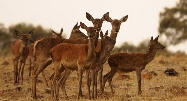 Investigación sobre embriones de ciervo ibérico.