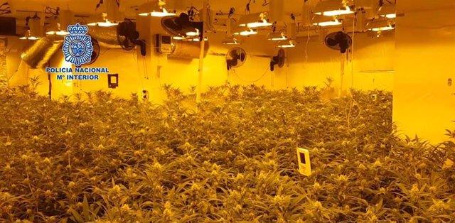 La Policía Nacional se incauta de 162 kilos de marihuana y detiene a 17 personas dedicadas al cultivo y distribución a gran escala