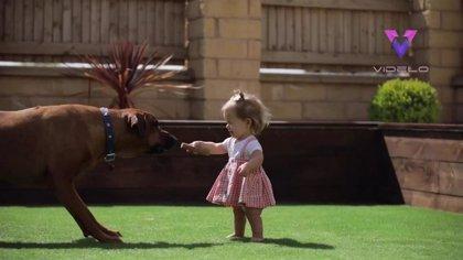 Esta niña con enanismo da sus primeros pasos gracias a la ayuda de su perro