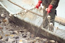 Agricultura ha publicado las bases reguladoras de ayudas para pesca y acuicultura.