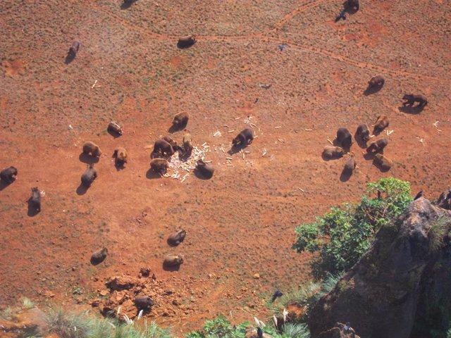 Recinto osos Cabárceno visto desde la telecabina. Archivo.