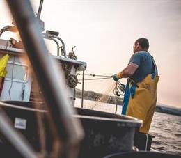 Lonjas y pescadores