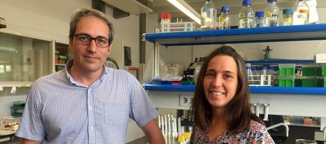 En la investigación han participado los investigadores del CIBERER Bru Cormand y Raquel Rabionet.