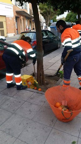 Operarios de Lipasam en la recogida de la naranja