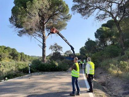 La Junta realiza nuevos trabajos de poda en la A-6177 a su paso por Andújar (Jaén) para mejorar la seguridad vial
