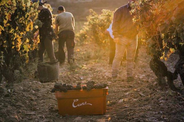 """Cvne prevé una cosecha de """"alta calidad"""" para Imperial, Viña Real y Contino en Rioja, pero más """"escasa"""""""