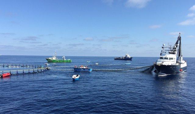 Campaña de pesca de atún rojo Balfegó