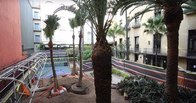 El Ateneu Barcelons traslada cinco palmeras de su jardín a un vivero