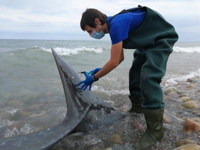 Toman muestras al cetáceo