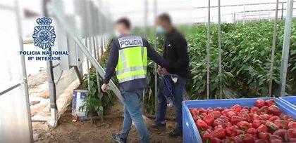 Detenidas 19 personas por explotar en el campo a inmigrantes irregulares aprovechando su situación desesperada
