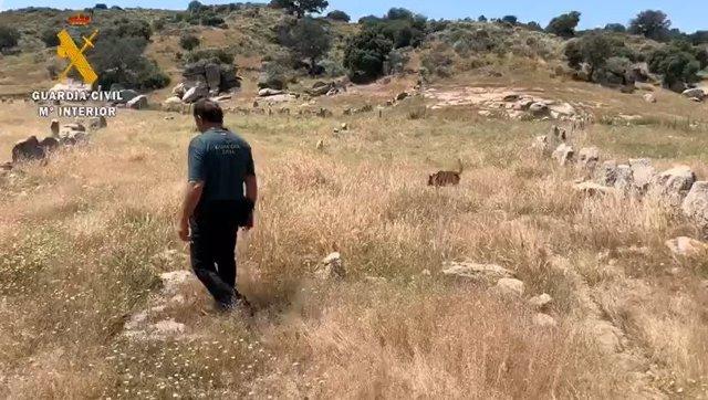 Dispositivo de búsqueda de una mujer en Bohonal de Ibor (Cáceres)