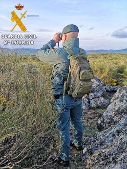 Efectivos de la Guardia Civil localizan dos capturaderos de animales en Segovia.