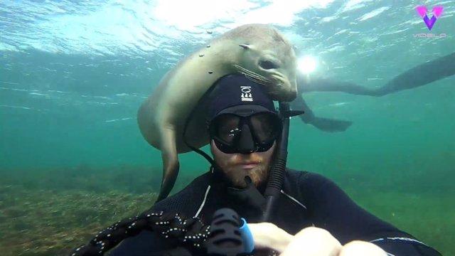 Un fotógrafo captura en vídeo el momento en que un león marino se acerca para jugar con él
