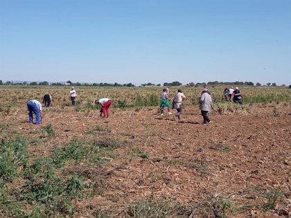 """CCOO ve """"extraordinariamente positiva"""" la concesión del permiso de trabajo a jóvenes migrantes del sector agrario"""