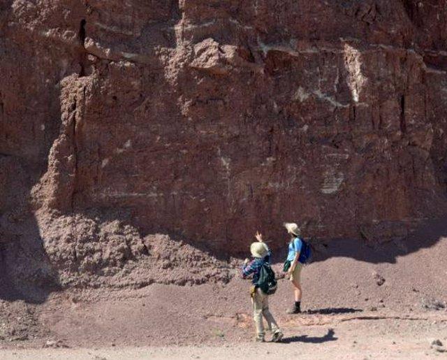 No medió catástrofe en la extinción masiva de hace 215 millones de años