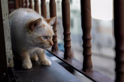 Piden cárcel a un joven en Sevilla por pegar fuego a una gata y rociarle los ojos con colonia