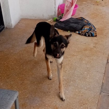 La Policía halla un perro desnutrido en el balcón de una vivienda de València y remite diligencias a Fiscalía