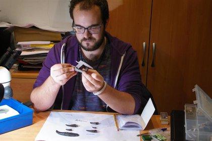 Inician una investigación sobre el conjunto de dientes de dinosaurios carnívoros de Torrelara (Burgos)