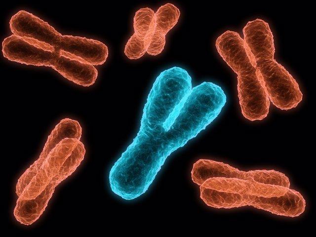 Cromosoma (Archivo)
