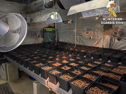 Investigada una pareja por una plantación de marihuana intervenida en un almacén en Tomiño