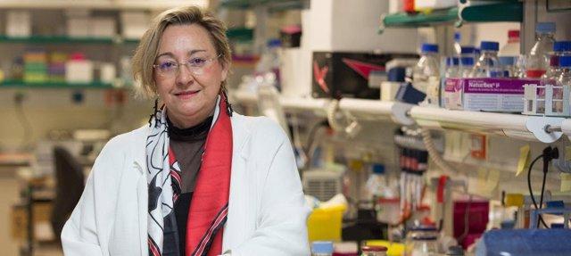 La investigadora del Instituto de Neurociencias del CSIC, Ángela Nieto,