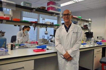 Fisabio estudia factores genéticos que expliquen por qué algunas personas sufren más grave el coronavirus