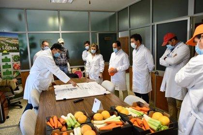 Junta destaca el empuje y la calidad del sector hortofrutícola en la provincia de Cádiz