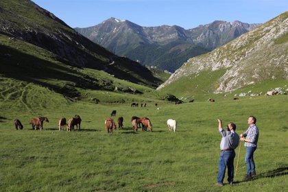 Más de 5.000 ejemplares de ganado suben de Camaleño al puerto de Áliva