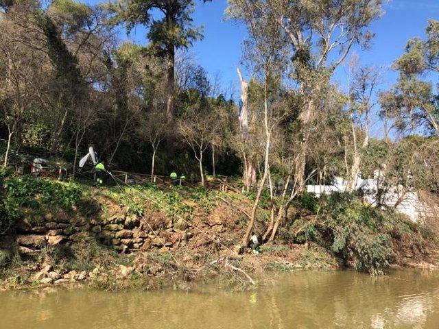 Trabajos en el Monumento Natural de las Riberas del Guadaíra